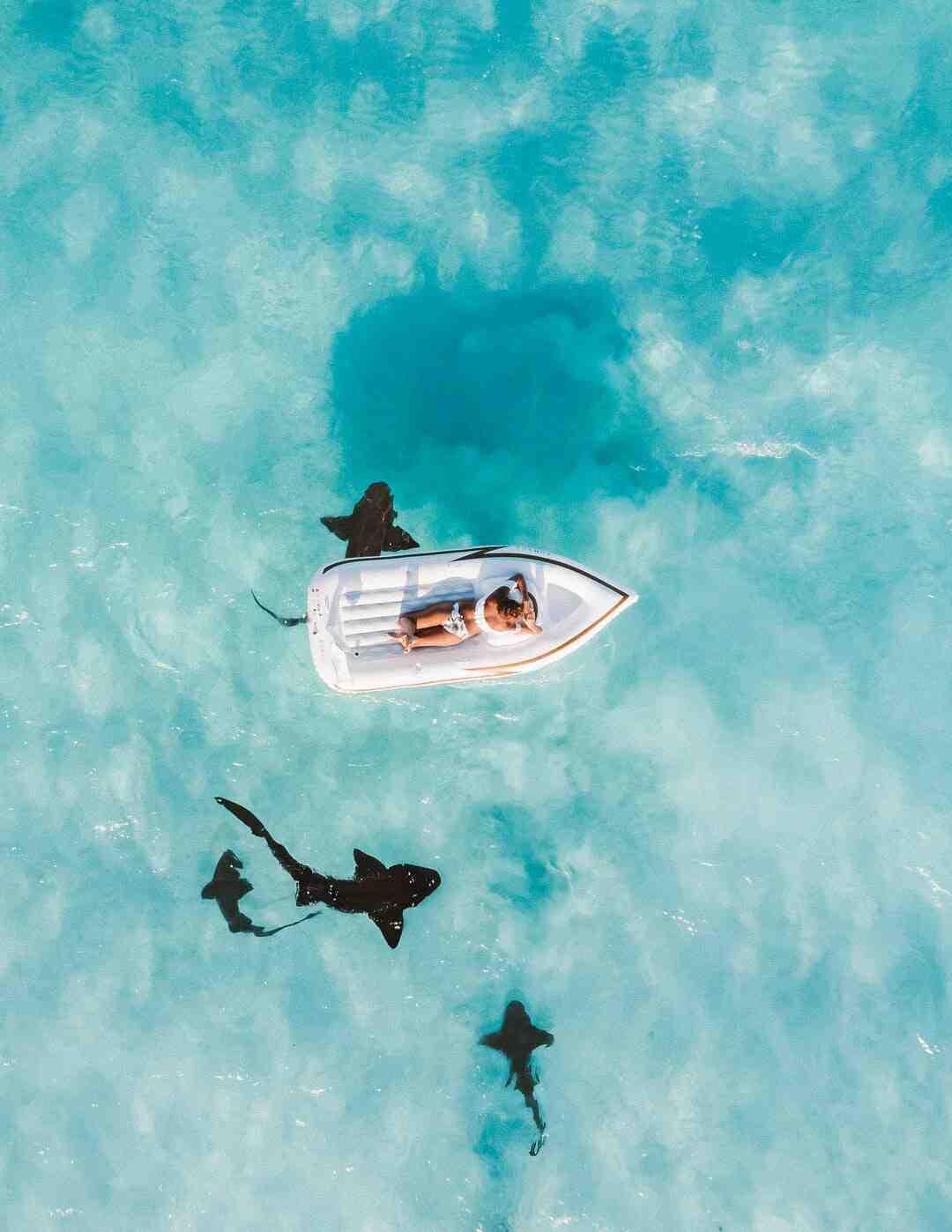 Comment éviter les requins