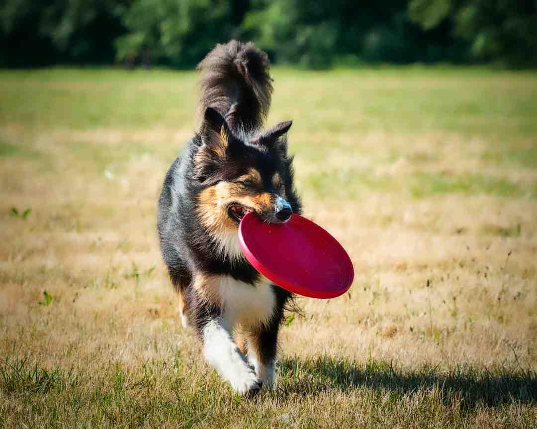 Comment lancer un frisbee loin ?